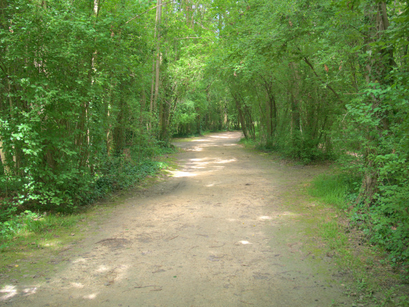 Chemin forestier du parc de l'Ile d'Amour