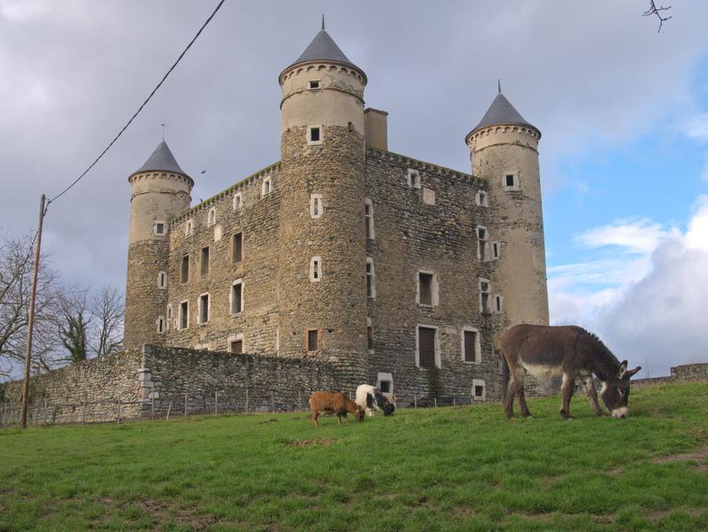 Animaux devant le château